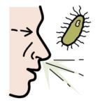 Schematyczny obrazek przedstawiający profil twarzy kichającego człowieka, a obok twarzy obrazek bakterii
